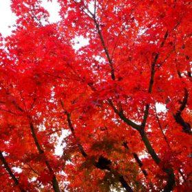 永観堂附近紅葉